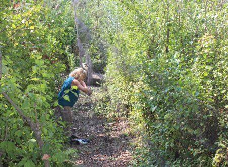 Pegognaga, parco san lorenzo: inanellamento avifauna nell'oasi